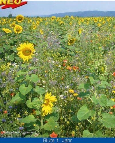 Kiepenkerl Blühende Landschaften 1 kg