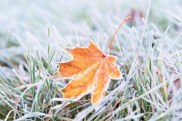 herbst-frost