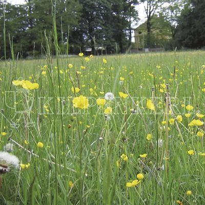 Kiepenkerl RSM 8.1.2 Biotopmischung für magere Standorte 1kg Saatgut
