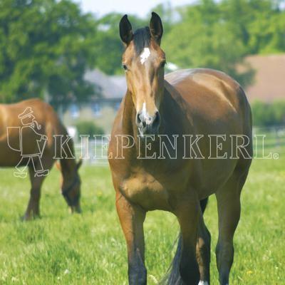 Country Horse 2120 Pferdeweide Balance Rasensamen 10 kg