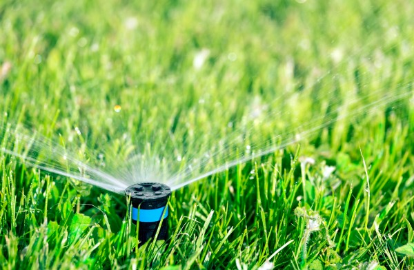 Rasen wässern, damit die Keime feucht bleiben und keimen können
