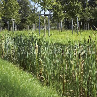 Kiepenkerl RSM 8.1.1 Biotopmischung 1kg Saatgut