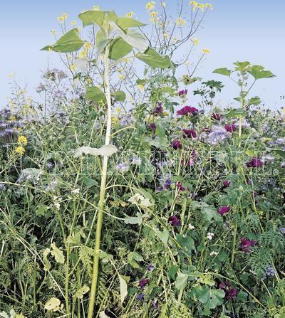 Kiepenkerl Flugwildmischung Blütenzauber 10 Kg