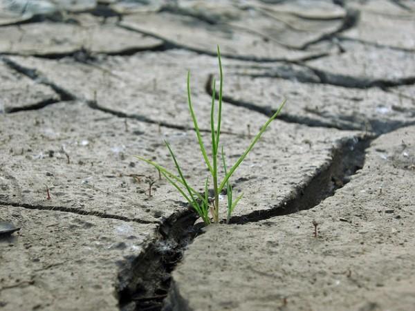 rasen-auf-lehmboden