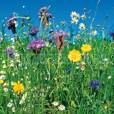 Kiepenkerl Reine Wildblumen-Mischung mehrjährig