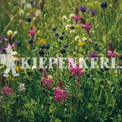Kiepenkerl Blumenwiesen-Mischung nach LÖBF Kleve-Kellen 1 Kilo Samen