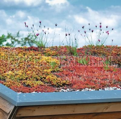 Kiepenkerl DSV 630 Dachbegrünung 1 Kg Samen