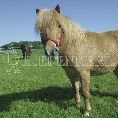 Country Horse Öko 2217 Pferdeweide Rasensamen 10 kg