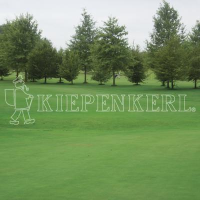 Kiepenkerl DSV 416 Golfrasen Grün Nachsaat 10 kg Rasensamen
