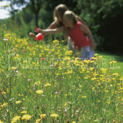 Kiepenkerl RSM 7.2.2 Landschaftsrasen Trockenlagen mit Kräutern 10 kg Rasensamen