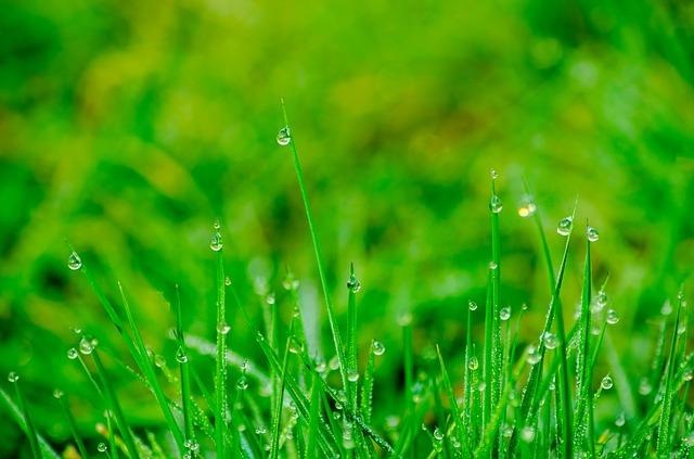 Außergewöhnlich Wann sollten Sie Rasen Starter Dünger einsetzen? Und wann nicht &TH_91