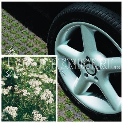 Kiepenkerl RSM 5.1.1 Parkplatzrasen mit 2 Prozent Achillea 10 kg Rasensamen