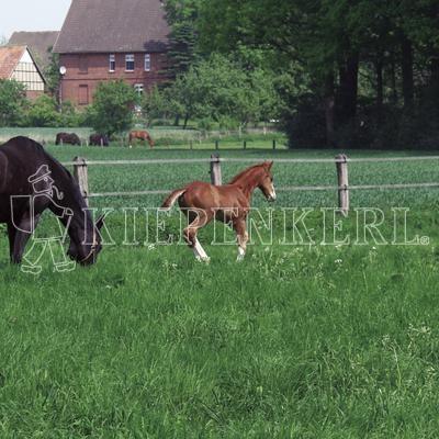 Country Horse 2117 Pferdeweide Rasensamen 10 kg